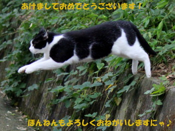 IMG_7925-003.jpg
